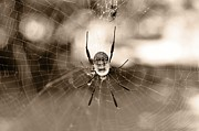 Araneidae Framed Prints - Bottoms-Up 3 Framed Print by Leana De Villiers