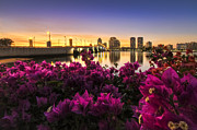 Florida Bridges Prints - Bougainvillea on the West Palm Beach Waterway Print by Debra and Dave Vanderlaan