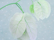 Snow Abstract Prints - Bougainvillea Ornaments Print by Irina Wardas