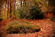 Fall Photographs Posters - Boulder And Autumn Leaves - Holmdel Park Poster by Angie McKenzie