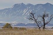 James BO  Insogna - Boulder Colorado Snowy Front Range View