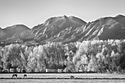 James BO  Insogna - Boulder County Colorado Flatirons View In Black and White
