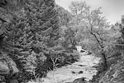 James BO  Insogna - Boulder Creek Winter Wonderland Black and White