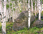 Aspen Grove Prints - Boulder Outside Boulder Print by Rich Franco