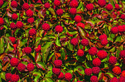 Fruit Shaped Prints - Bountiful Dogwood Fruit Print by Terrie Heslop