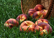 Peaches Photo Prints - Bountiful Harvest Print by Nikolyn McDonald