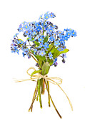 Background White Prints - Bouquet of forget-me-nots Print by Elena Elisseeva