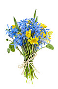 Blue Flowers Photos - Bouquet of fresh spring flowers by Elena Elisseeva