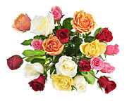 Multicolored Posters - Bouquet of roses from above Poster by Elena Elisseeva