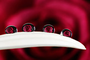 Beauty Mark Art - Bouquet of Roses by Mark Johnson