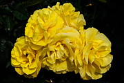 John Haldane - Bouquet of Yellow Roses
