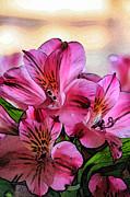 Pandyce McCluer - Bouquet