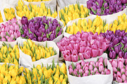 Amsterdam Photos - Bouquets of tulip flowers at a flower market by Oscar Gutierrez