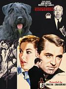 Bouvier Des Flandres - Flanders Cattle Dog Art Canvas Print - Suspicion Movie Poster Print by Sandra Sij