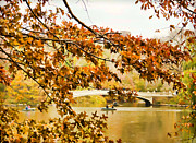 Bow Bridge Digital Art Prints - Bow Bridge In The Fall Print by Alice Gipson