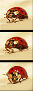 Walter Klockers - Bowing Ladybug . Art and...