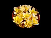 Plumerias Digital Art Prints - Bowl of Plumerias Print by Joe Carini