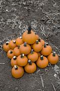 David Millenheft - Bowling for Pumpkins