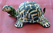 Turtle Ceramics - Box Turtle Sculptue by Debbie Limoli