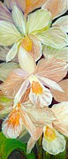 Boxed Orchids Detail Print by Anna Skaradzinska