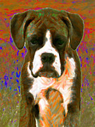 Boxer Puppy Digital Art Posters - Boxer 20130126v1 Poster by Wingsdomain Art and Photography