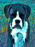 Boxer Puppy Digital Art Posters - Boxer 20130126v4 Poster by Wingsdomain Art and Photography