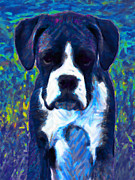 Boxer Puppy Digital Art Metal Prints - Boxer 20130126v5 Metal Print by Wingsdomain Art and Photography
