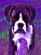 Boxer Puppy Digital Art Metal Prints - Boxer 20130126v6 Metal Print by Wingsdomain Art and Photography