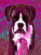 Boxer Puppy Digital Art Posters - Boxer 20130126v7 Poster by Wingsdomain Art and Photography