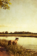 Boxer Dog Art Print Prints - Boxer Dog by the Pond at Sunset Print by Stephanie McDowell