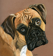 Boxer Pastels Framed Prints - Boxer Dog Framed Print by Sarah Dowson