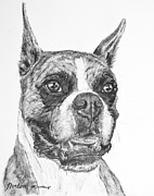 Boxer Drawings Prints - Boxer Dog Sketch Print by Kate Sumners
