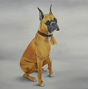 Boxer Painting Framed Prints - Boxer  Framed Print by Gwen Card