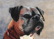 Boxer Portrait Paintings - Boxer Portrait by Carolyn English