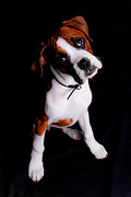Boxer Puppy Photos - Boxer Pup by Jt PhotoDesign