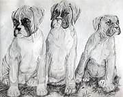 Boxer Drawings Prints - Boxer Puppy Dog Poster Print Print by Olde Time  Mercantile