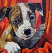 Boxer Painting Framed Prints - Boxer Puppy Framed Print by Stacy Caldwell