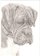 Boxer Dog Drawings Prints - Boxer Print by Rebecca Vose