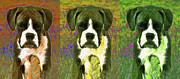 Boxer Puppy Digital Art Posters - Boxer Three 20130126 Poster by Wingsdomain Art and Photography