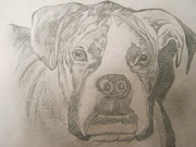Boxer Dog Drawings Framed Prints - Boxer Framed Print by Venice  Kichura