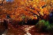 Tam Ryan - Boyce Thompson Arboretum