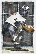 Football Mixed Media - Boyertown Bear by Trish Tritz