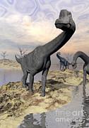 Brachiosaurus Dinosaurs Near Water Print by Elena Duvernay