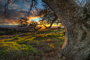 Sonoma County Originals - Branch of Light by Robert M Bowman