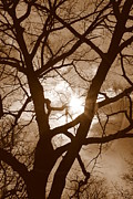 Sad Moon Prints - Branches in the Dark 2 Print by Valentino Visentini