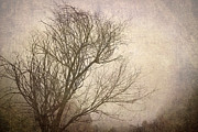 Granada Prints - Branches In The Wind Print by Guido Montanes Castillo