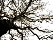 Scary Digital Art Prints - Branches Print by Michelle Calkins