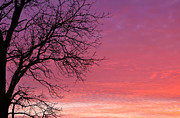 Rcnaturephotos Photos - Branches of Sunset by Rachel Cohen
