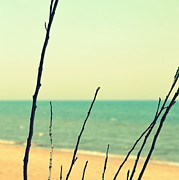 Atlantic Beaches Prints - Branches on the Beach Print by Michelle Calkins