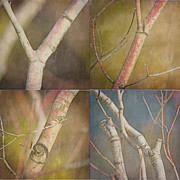 Mosaic Photos - Branches Times Four by Bonnie Bruno
